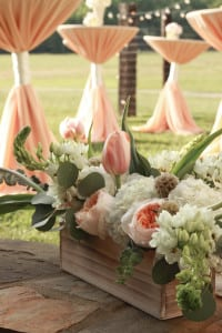 Peach Highboy Ivory Wrap David Austin Roses