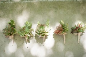 succulent boutonniere flower buds spindle photography