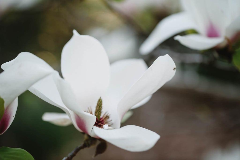 Aldridge gardens blooms